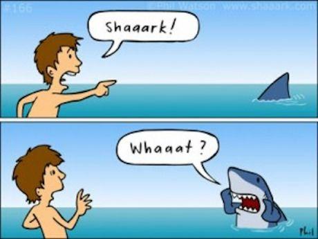 The life of a shark