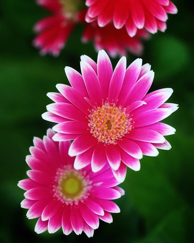 """meiko🦋風花🦋 on Instagram: """"🦋🌸🌹🌺🌼🌻☘️🦋🌹🌸 . #9vaga_flowers9 #9vaga_flowersart9 #flower_igers #ponyfony_flowers #top_favourite_flowers #flowers_super_pics…"""""""