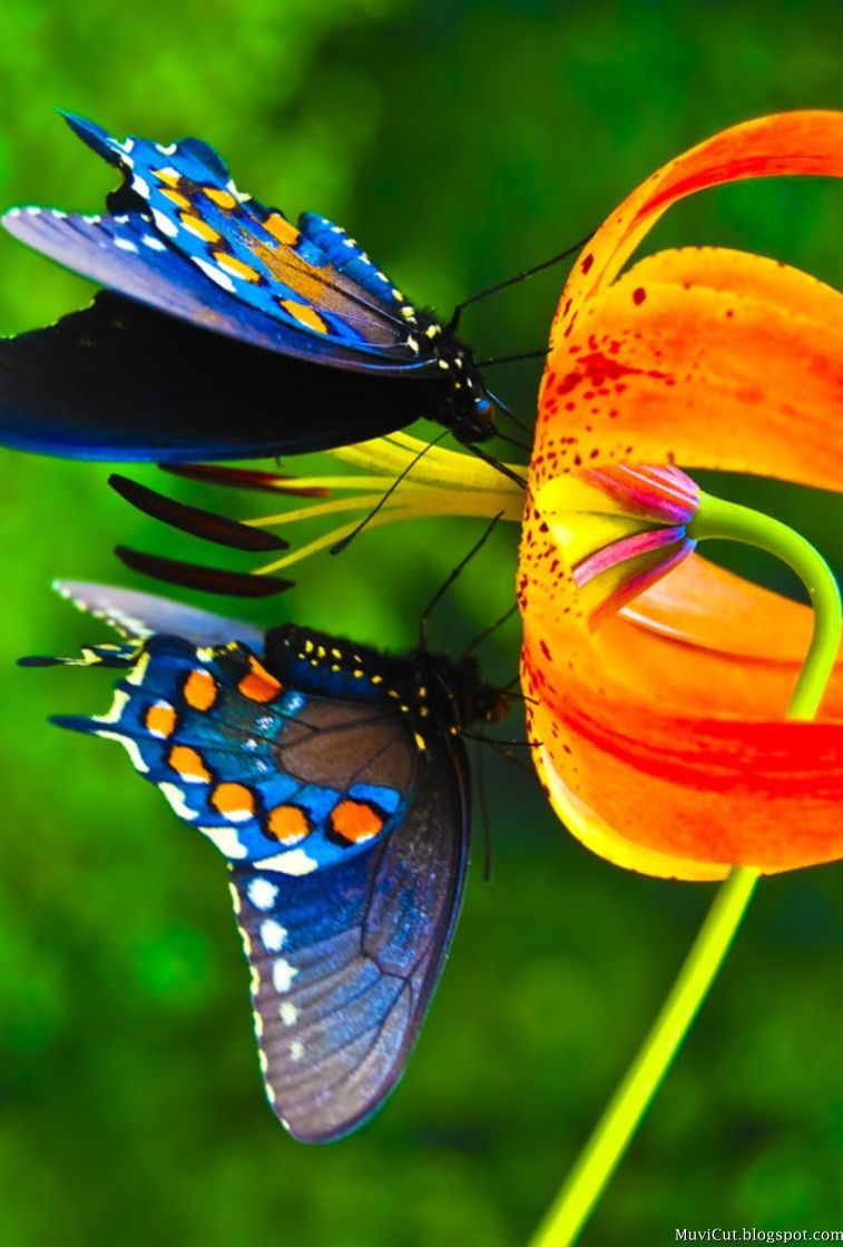 Top 14 Most Beautiful Butterflies in the World [Amazing ...  Top 14 Most Bea...
