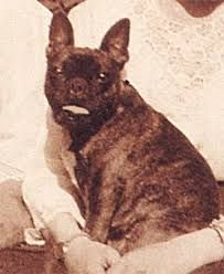 romanov family pets - Google Search