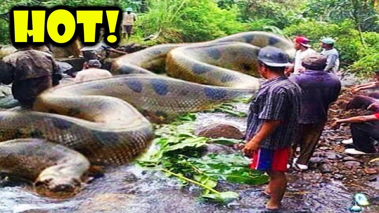 Amazing human catch tree snake using the simple net trap