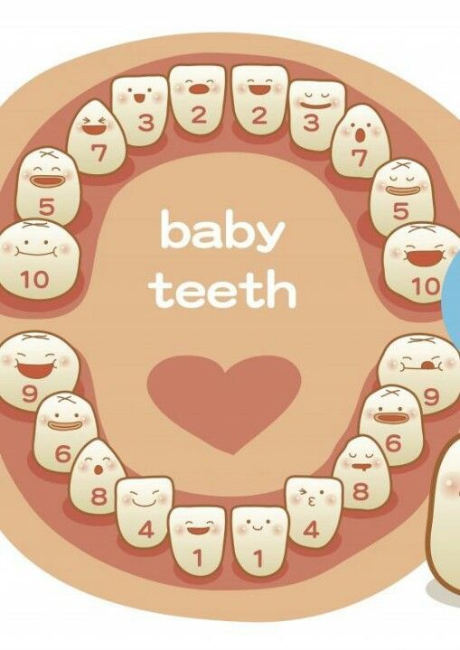A ParentS Guide To Their ChildrenS Teeth  Babies Baby Teething