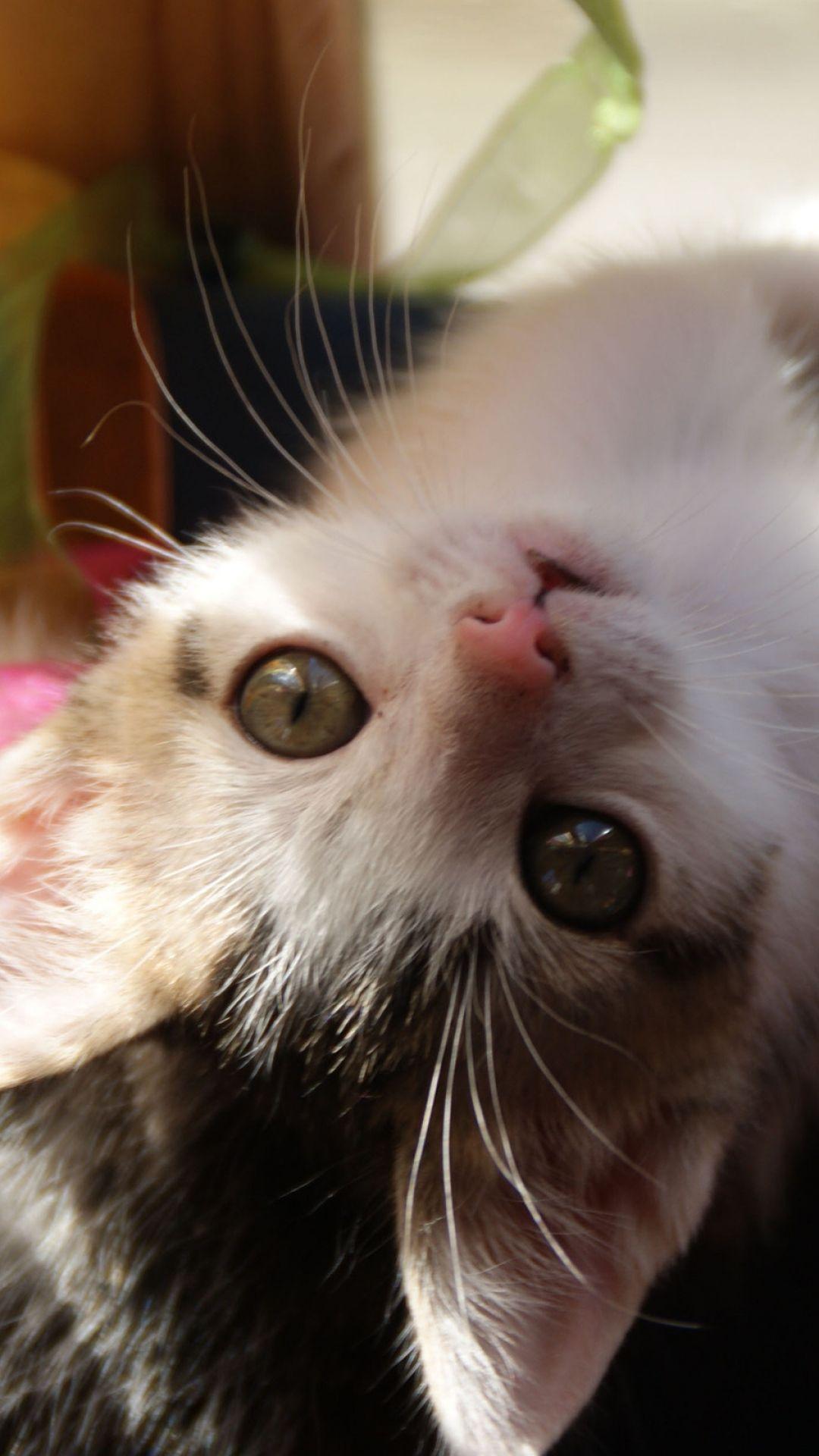 kitten, playful, look, baby Kittens cutest, Kitten