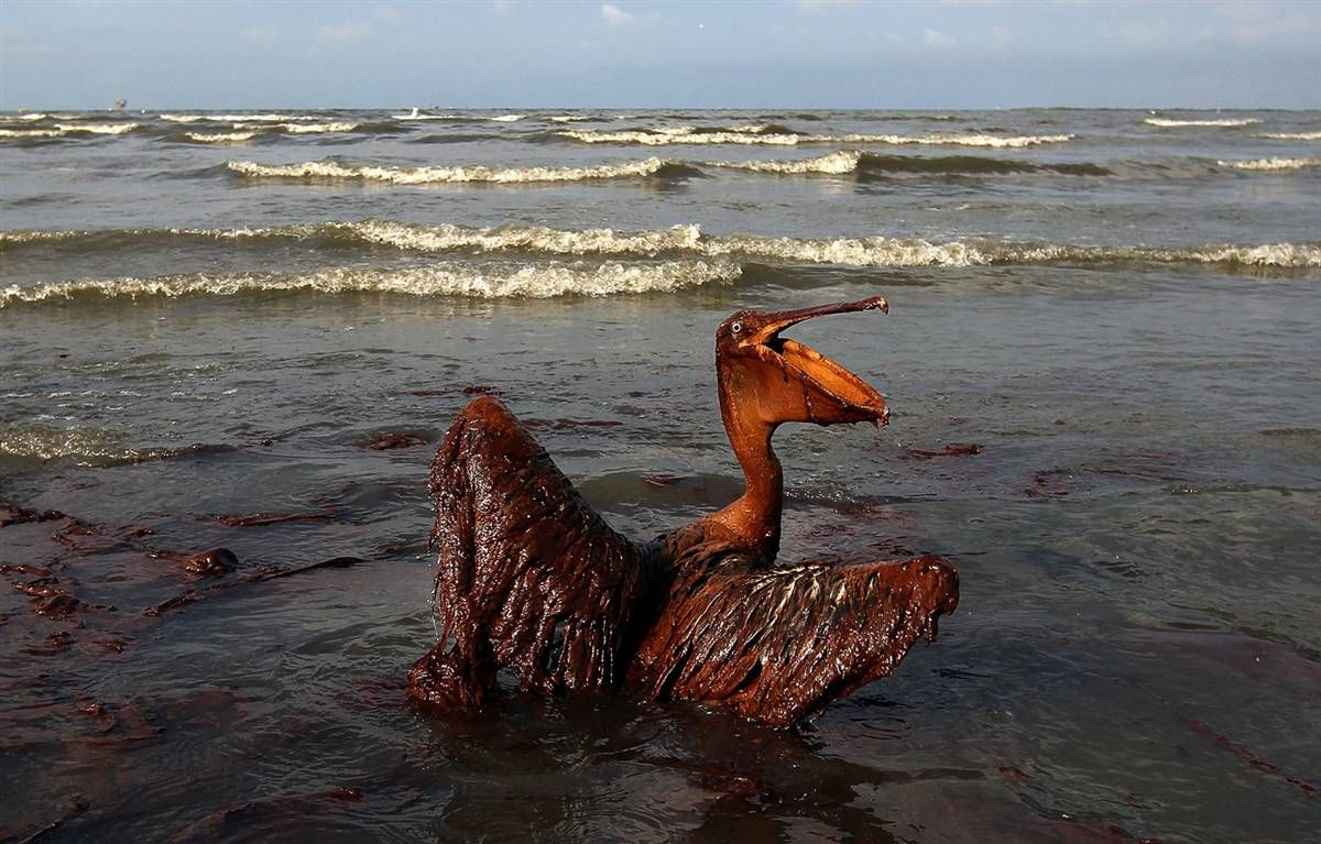 the gulf of mexico oil spill The gulf of mexico research initiative (gomri) has been a sponsor and founding member of the executive committee of the gulf of mexico oil spill and ecosystem science (gomoses) conference [].