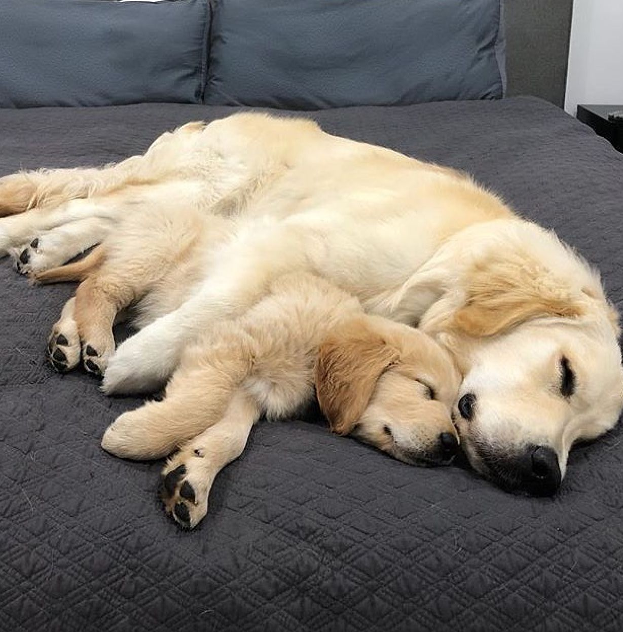 Cute Mother Dog And Puppy Dogs Golden Retriever Golden