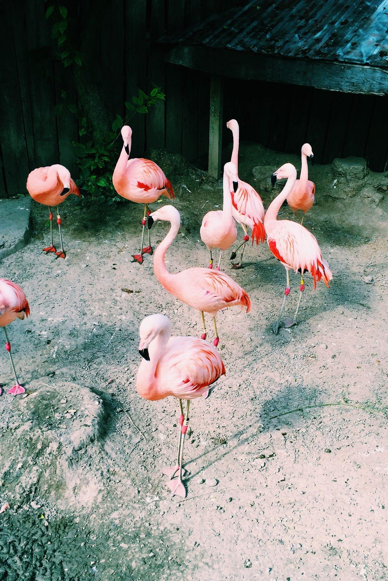 More Flamingos // photo by eberles97 | VSCO Grid