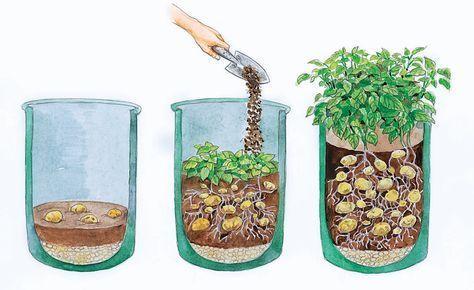 Kartoffeln im Pflanzsack anbauen: Große Ernte auf kleinem Raum