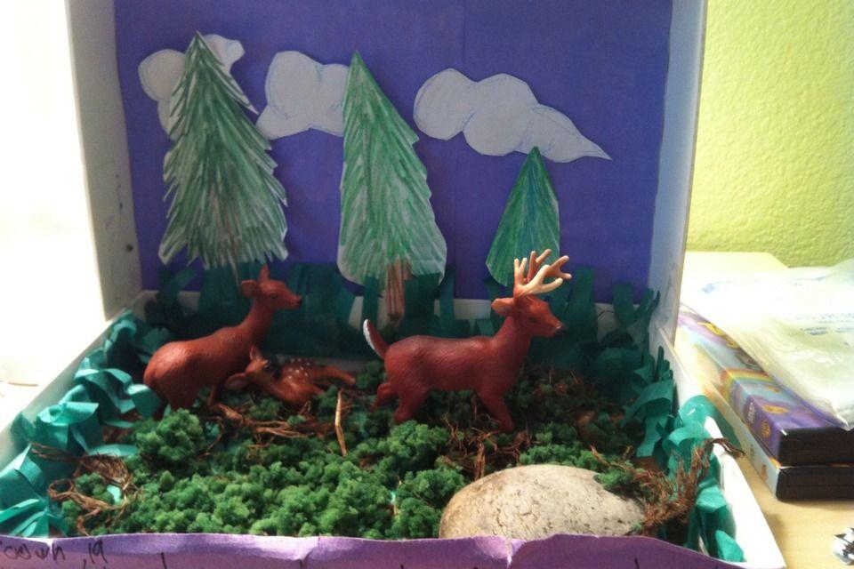 Diorama Of The White Tail Deer | Kids stuff | Deer habitat