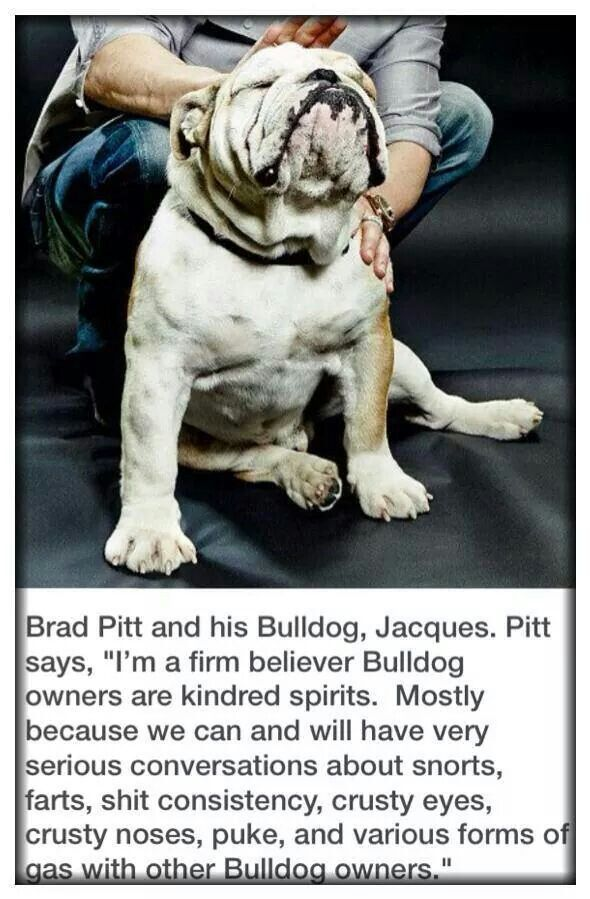 Pin By Ashley On Dogs Bulldog Celebrity Dogs