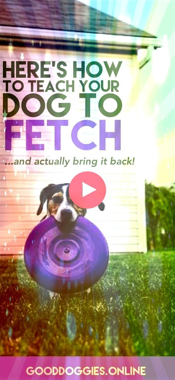 to Teach Your Dog to Fetch Check out these dog training tips that are fun and easyHow to Teach Your Dog to Fetch Check out these dog training tips that are fun and easy S...
