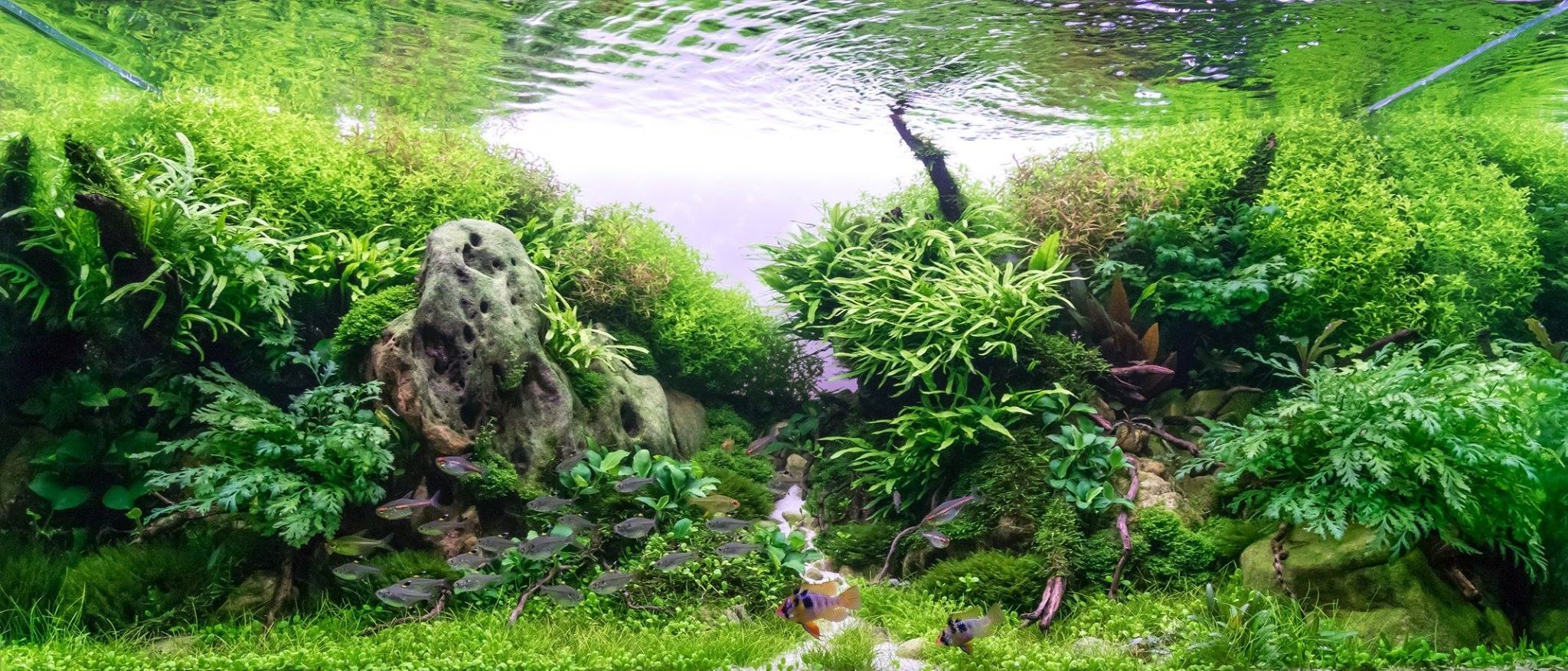 Follow This Space To Get A One Click Access To Latest Information, Videos  And Articles About The State Of The Art In Aquascaping, As Well As Other  Related ...