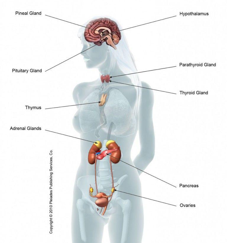 Wassereinlagerungen Hormone