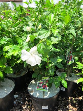 Las mejores plantas para terrazas con sol terrasse - Plantas que aguanten el sol ...