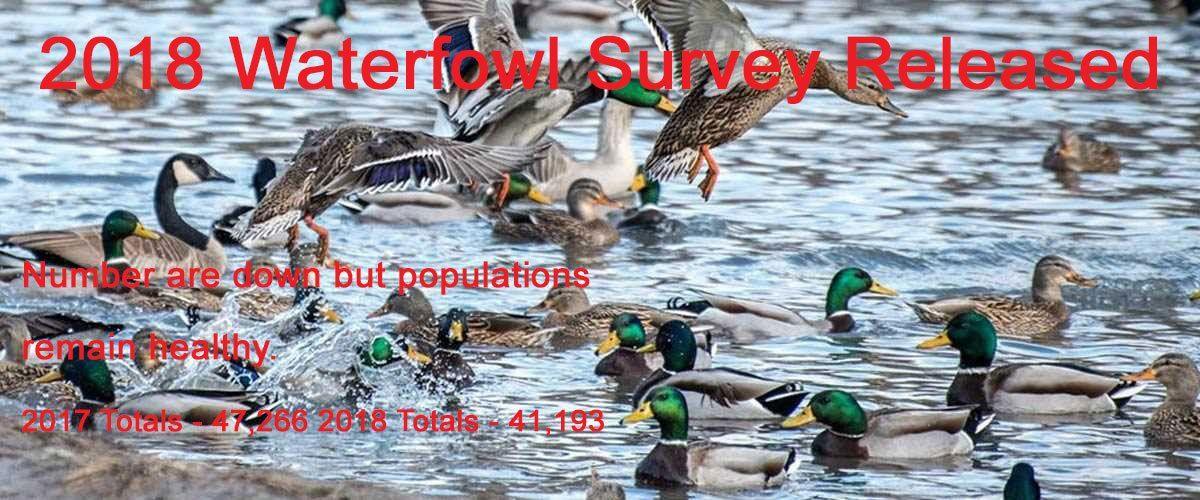 2018 Duck Numbers Released Canadian wildlife, Waterfowl