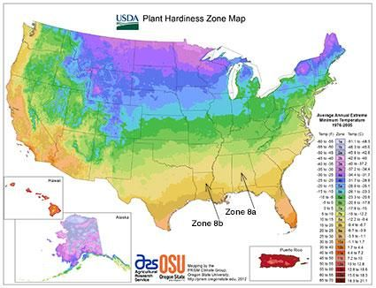 Usda Gardening Zone 8 With Images Plant Hardiness Zone Map