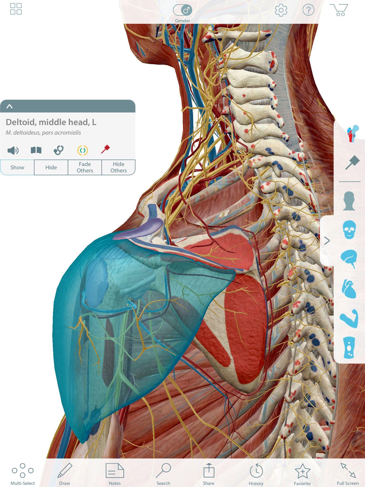Image Of Human Anatomy Human Anatomy Drawing Pinterest Anatomy