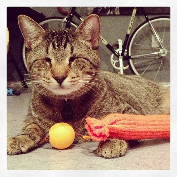 5 Famous Felines To Follow On Facebook Pet Day Internet Cats