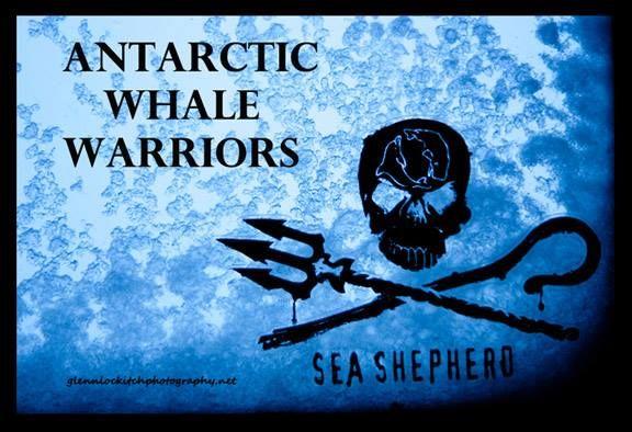 To remember... Antarctic Whale Warriors: Sea Shepherd Operation Zero Tolerance Antarctic Campaign 2012/13. https://vimeo.com/84630113 #SeaShepherd #defendconserveprotect #OperationRelentless