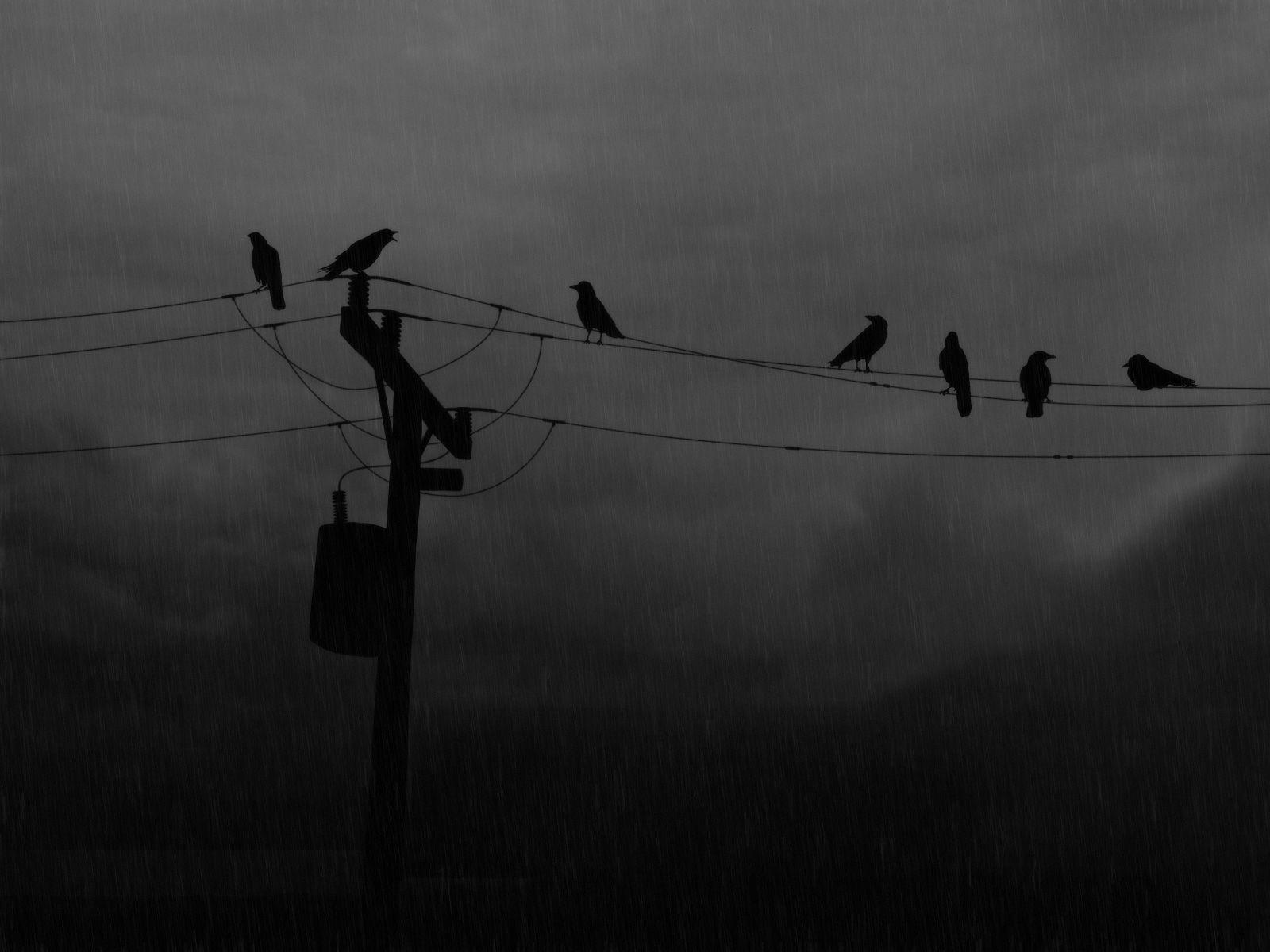 Flying Crow Wallpaper