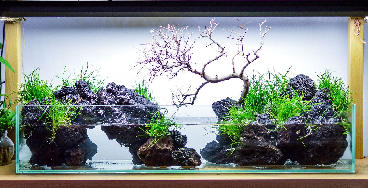 Lava rock tank with some brasiliensis – let's see where it goes :)