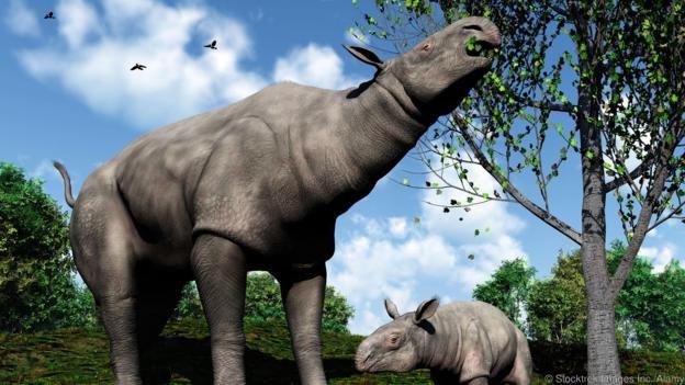 Paraceratherium was the largest ever rhino species (Credit: Stocktrek Images Inc./Alamy)
