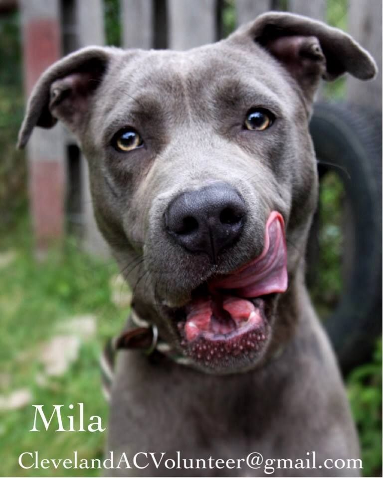 Adopt Me Mila Cleveland Animal Control Cleveland Ohio Ck Email