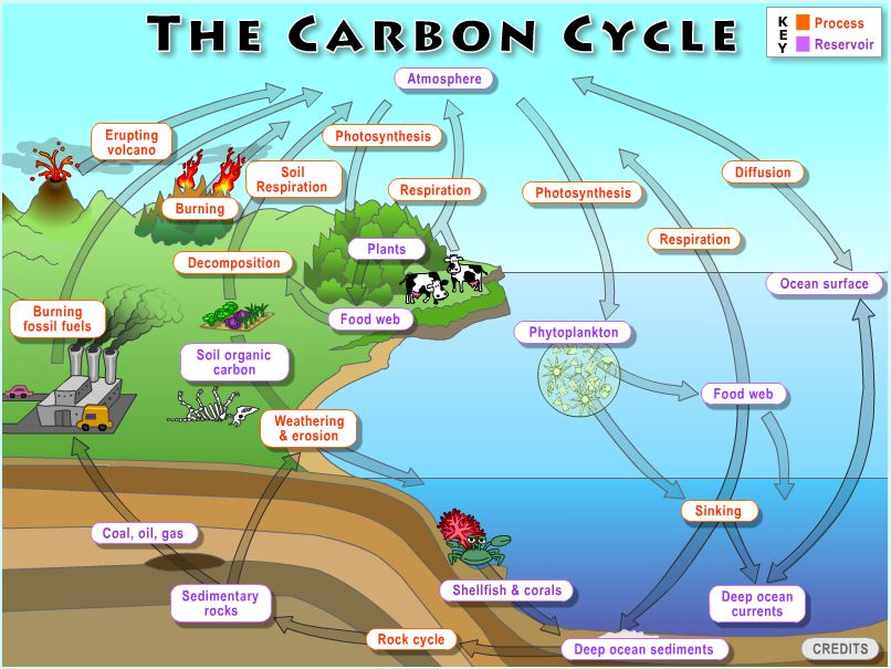 The Global Carbon Cycle (With images) Carbon cycle, Ap