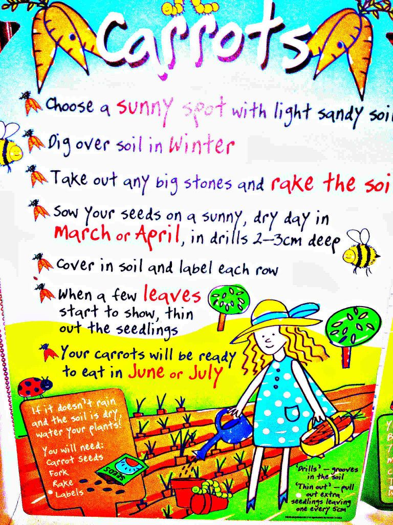 growing vegetables with children if you want to grow vegetables
