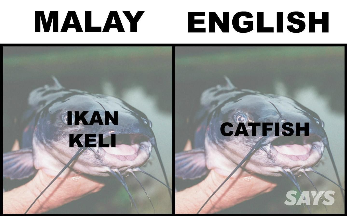 What S Ikan Patin In English Here Are 17 Translations Of Fish