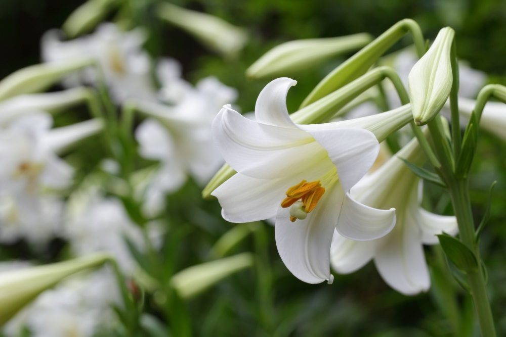 7 Popular Sympathy Flowers and Their Meanings Funeral