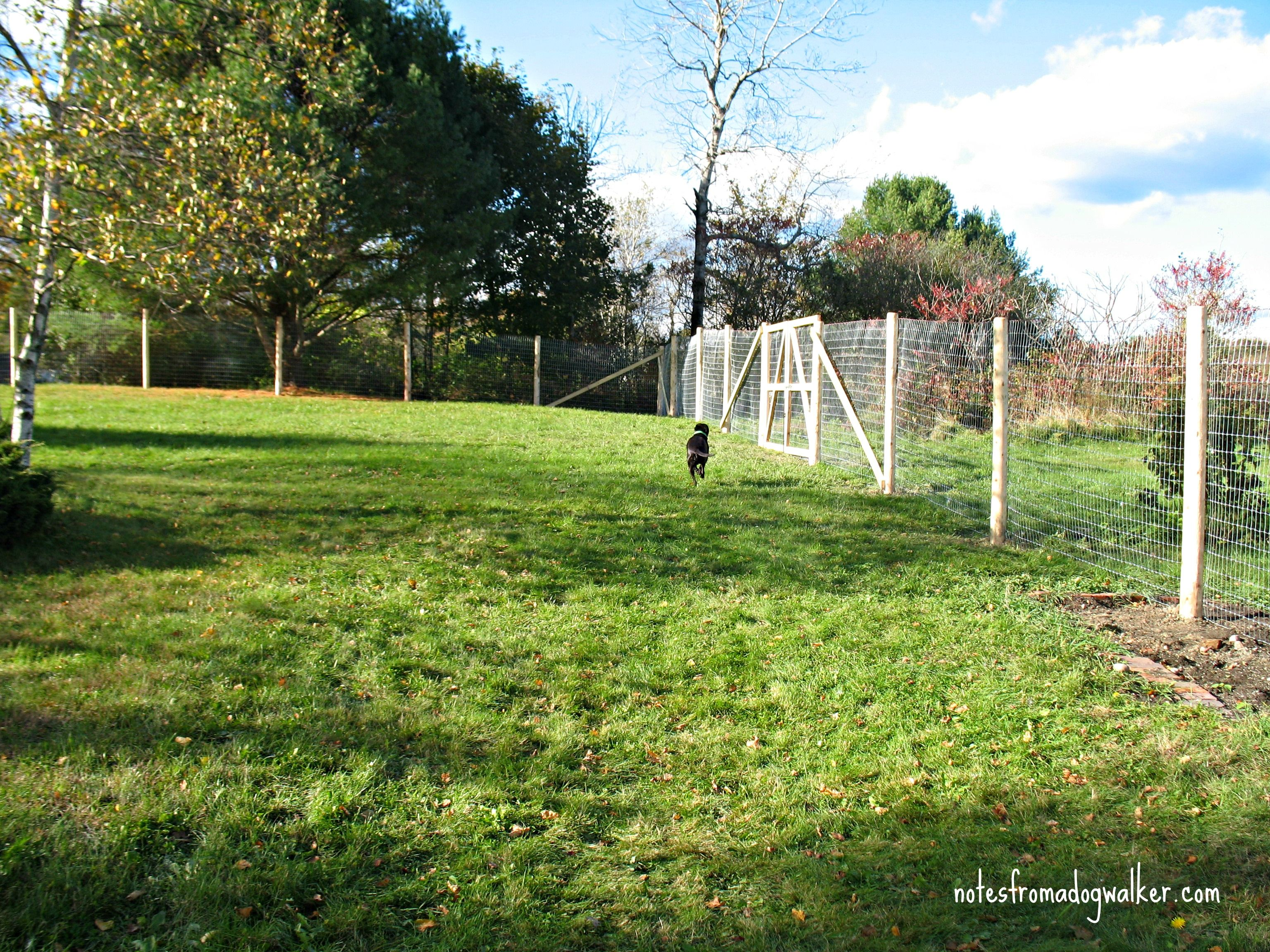 7 Ways To Dog Proof Fence U003d Great Article On Dog Fencing And Dog Run!