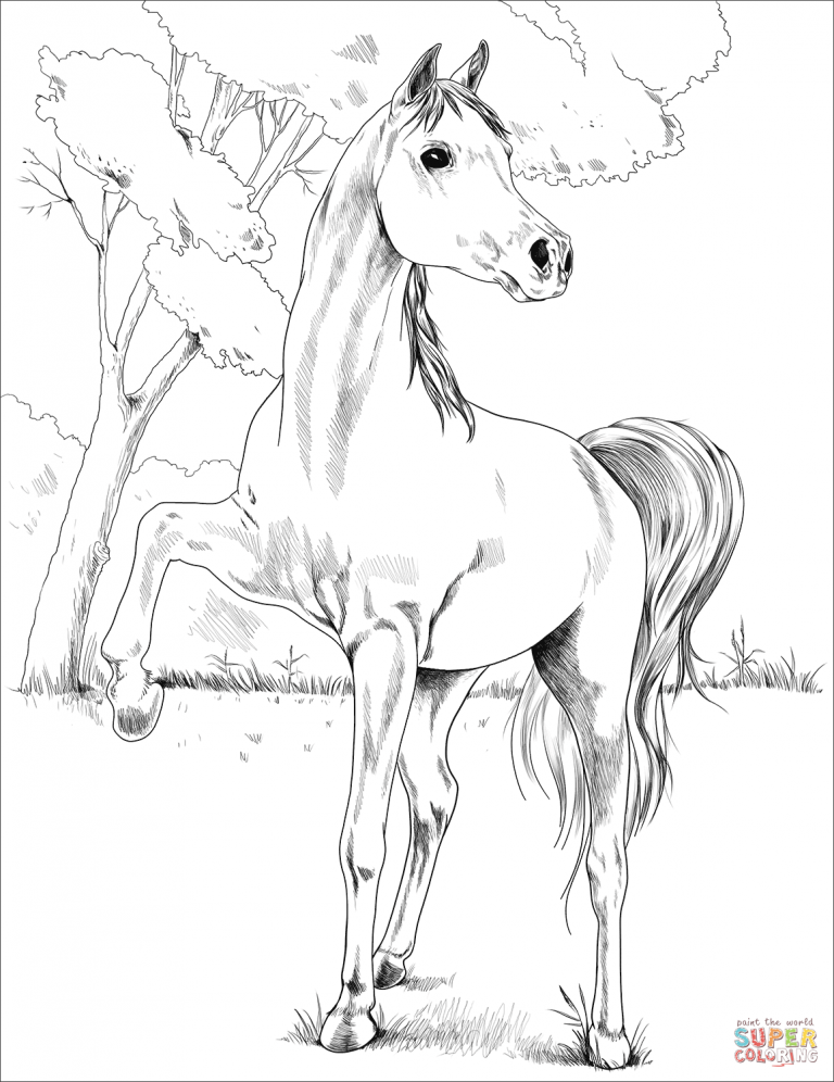 Free Printable Coloring Pages For Egyptian Arabian Coloring Pages Free Download Horse Coloring Pages Horse Coloring Books Coloring Pages