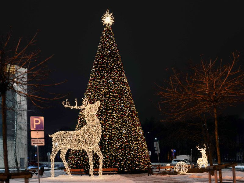 latvias largest christmas tree now interactive too - Largest Christmas Tree