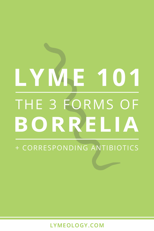 Lyme 101: The Three Forms of Borrelia + Corresponding