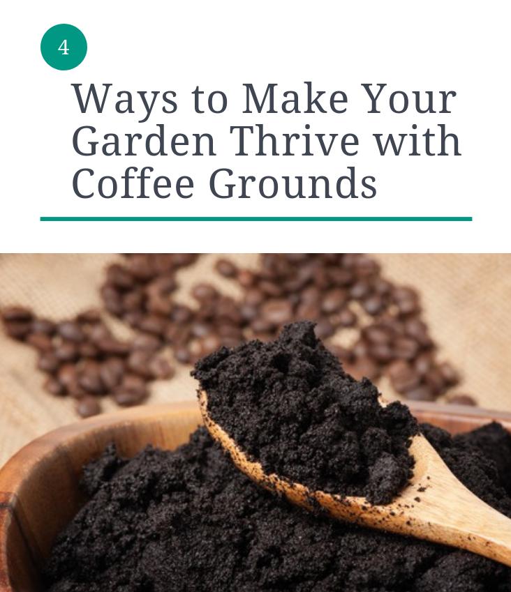 How To Improve And Maintain Your Garden Soil Coffee Grounds Garden Soil Garden