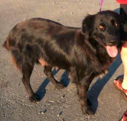 Xali Adopted 10/28/13