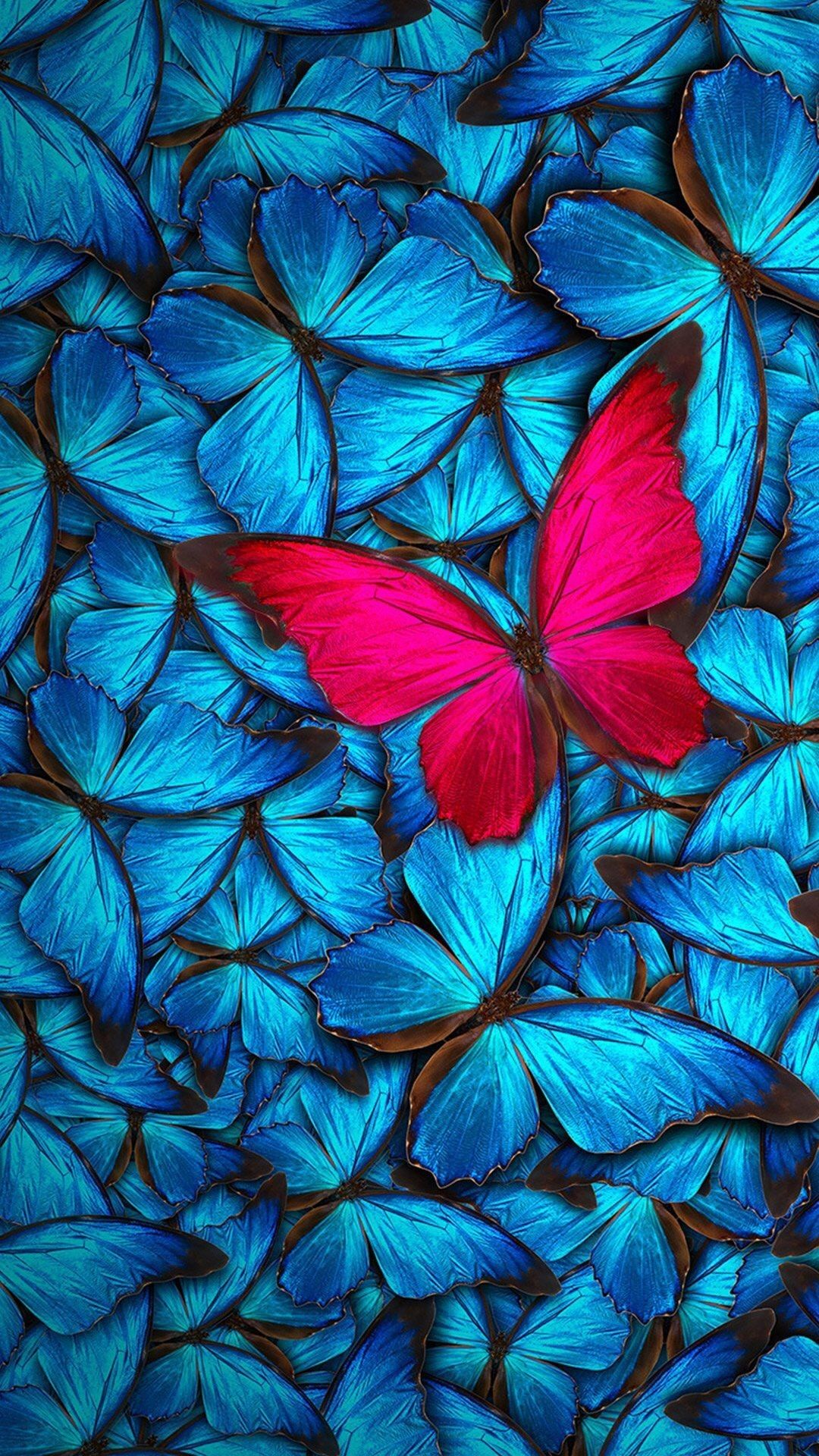 Blue Butterfly Background Flip Wallpapers Download Free