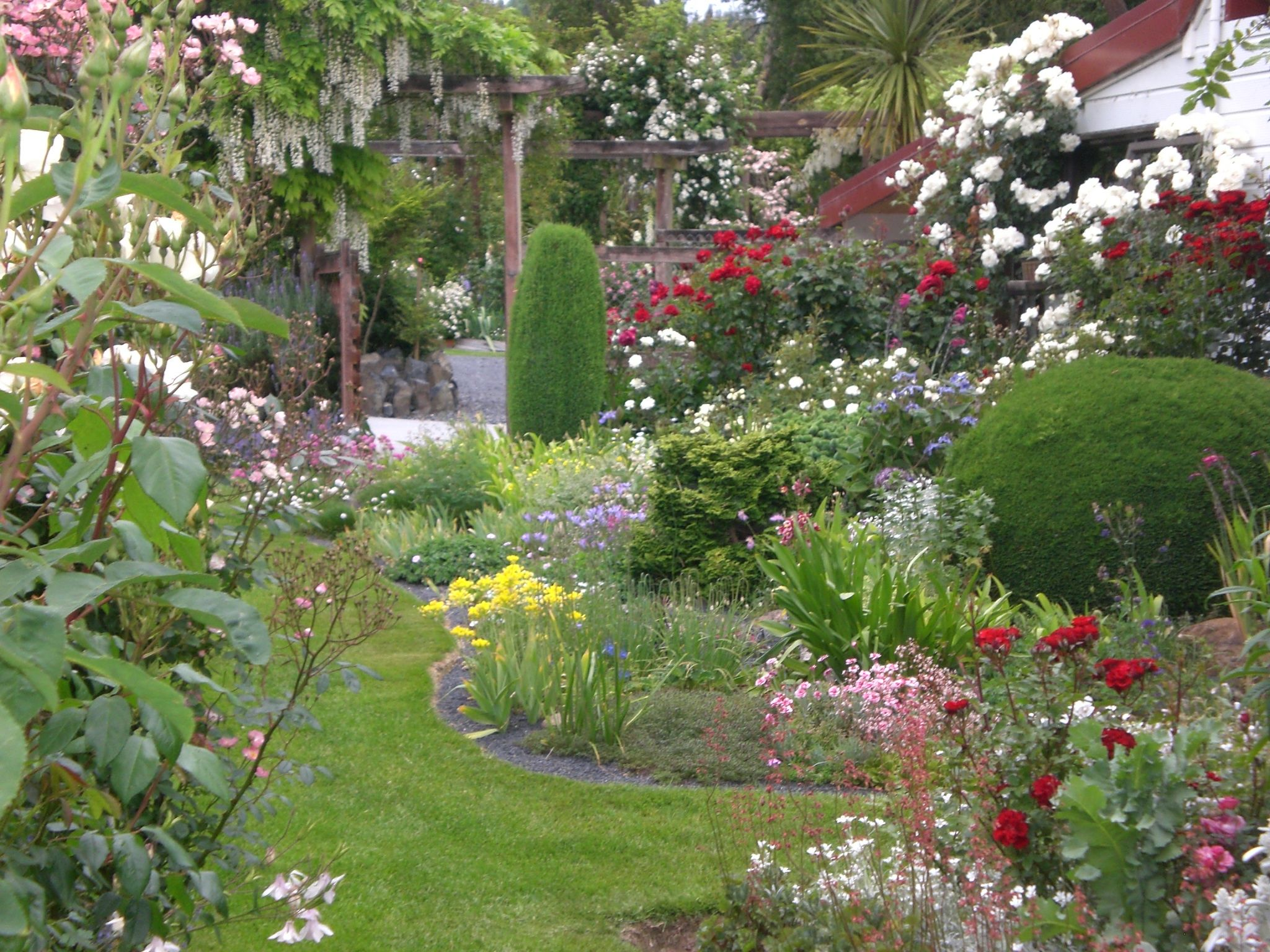 cottage garden with roses perennials conifers love