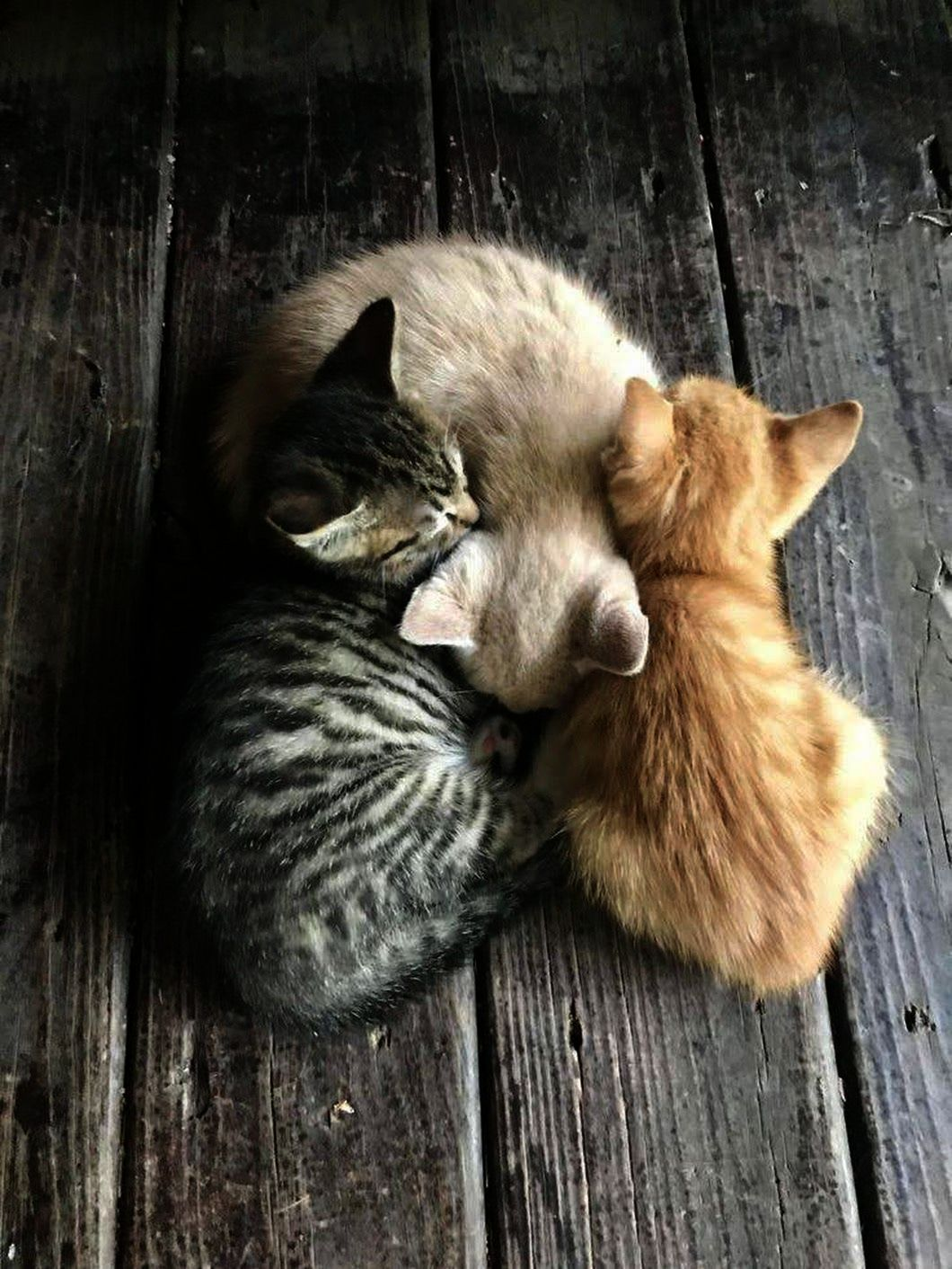 Cute Kittens Being Funny Cute Cats Buzzfeed Cute Cats Cats Kittens