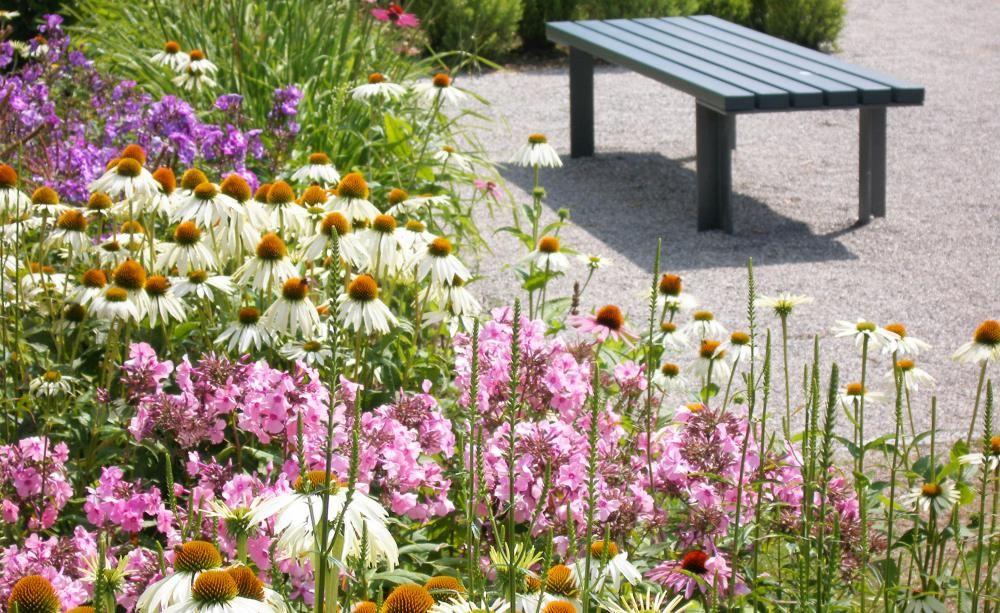 Zimmerpflanzen Gestaltungsideen phlox gestaltungsideen fürs beet flammenblume gärten und gartentipps
