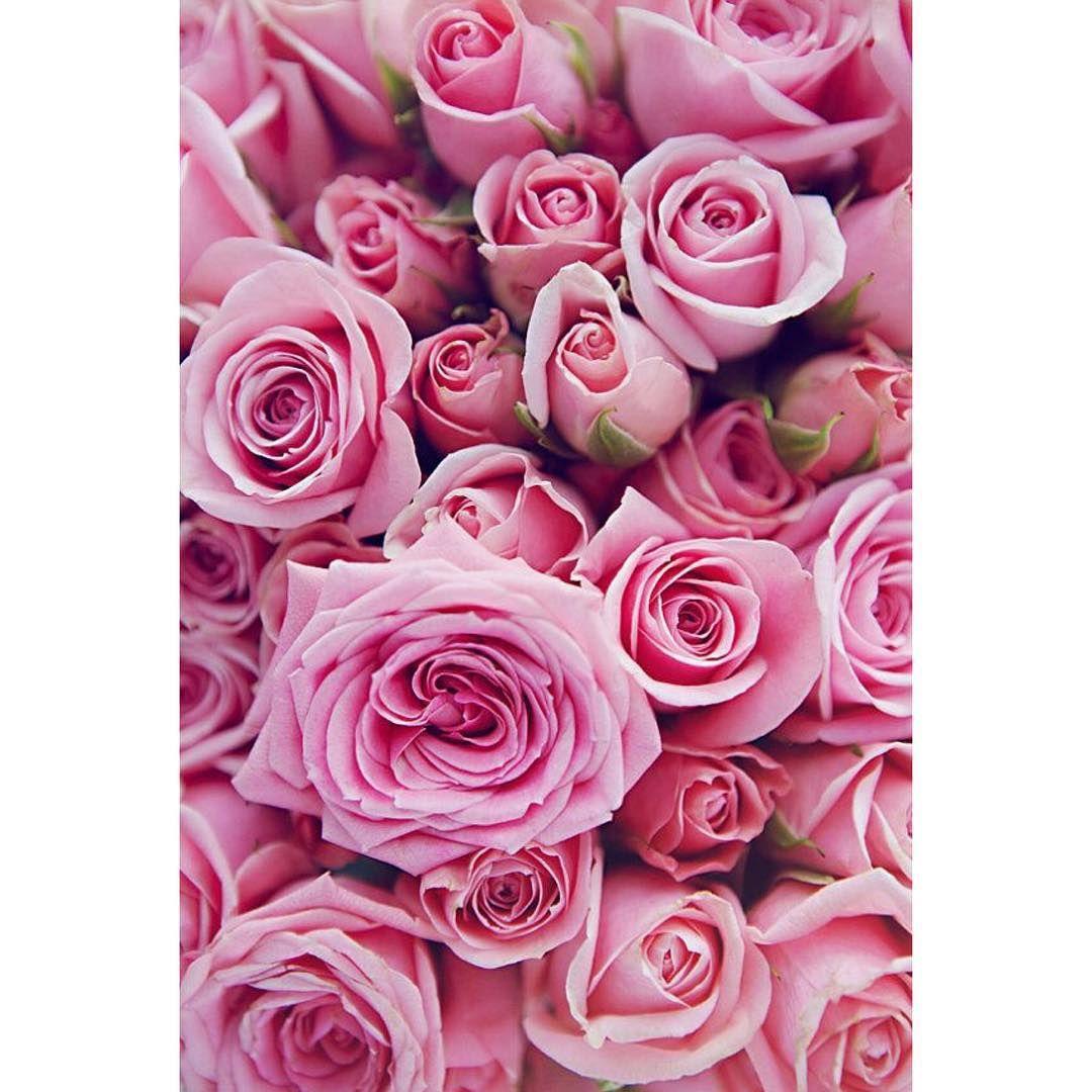 Happy Friday Viragkuldes Flowerdelivery Rose Pink