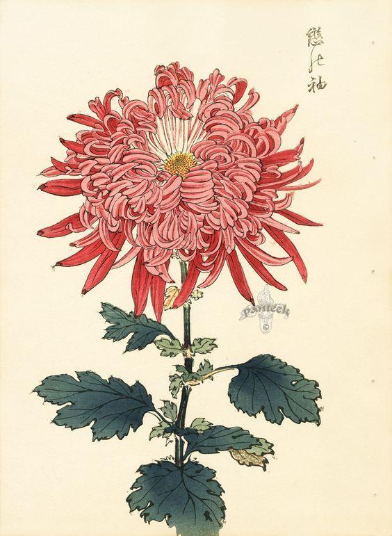 Keika Hasegawa Chrysanthemum Wood Block Prints 1893 Graphics Japanese Woodblock Printing Flower Art Japanese Art