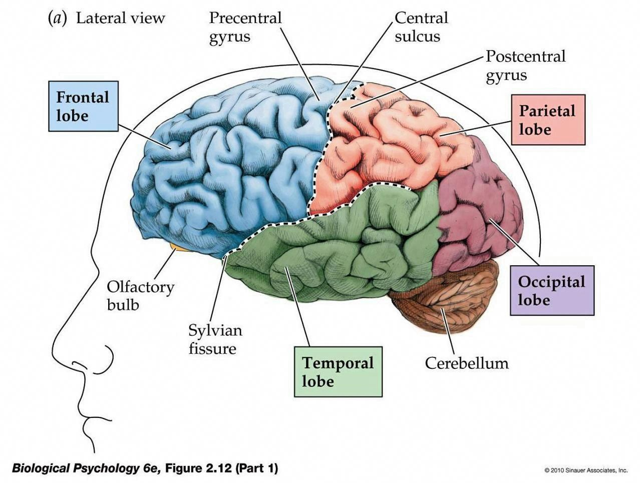 can i improve my memory # | Brain injury, Memory loss ...