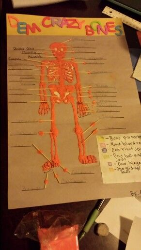 human skeleton product materials -cut out of human skeleton -tooth, Skeleton