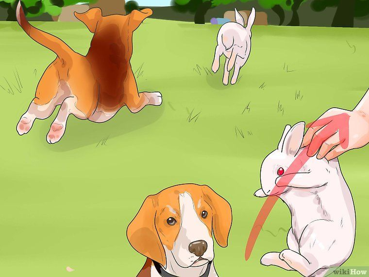 Train A Dog For Rabbit Hunting Rabbit Hunting Hunting Dogs Hunting