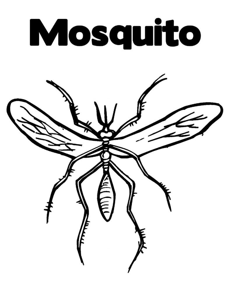 Free Printable Mosquito Coloring Pages For Kids | Animal Coloring ...