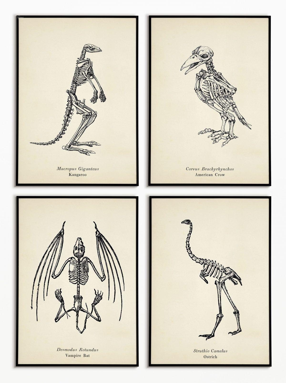 10 Free Animal Skeleton Printables Vintage Style