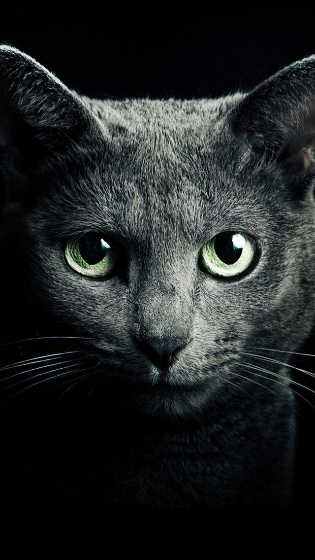 Art Creative Black White Cat Animals HD IPhone Wallpaper