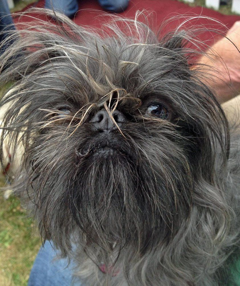 Pin On Contestants Of The World S Ugliest Dog Competition
