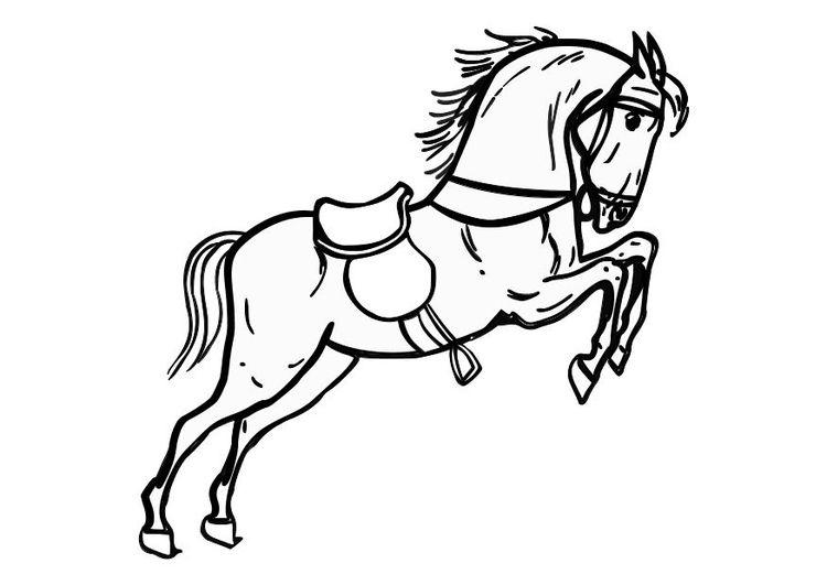 kleurplaat springend paard kleurplaten dieren